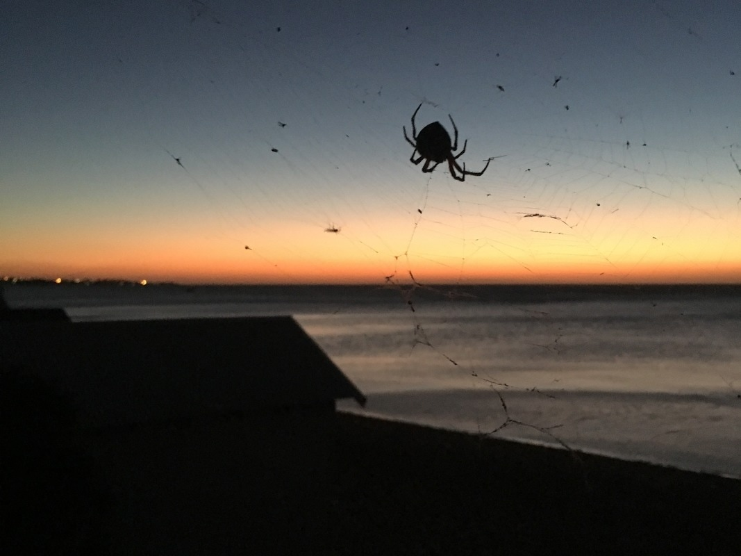 Spider's view of the sunset, Mount Eliza, Mornington Peninsula, Victoria, Australia