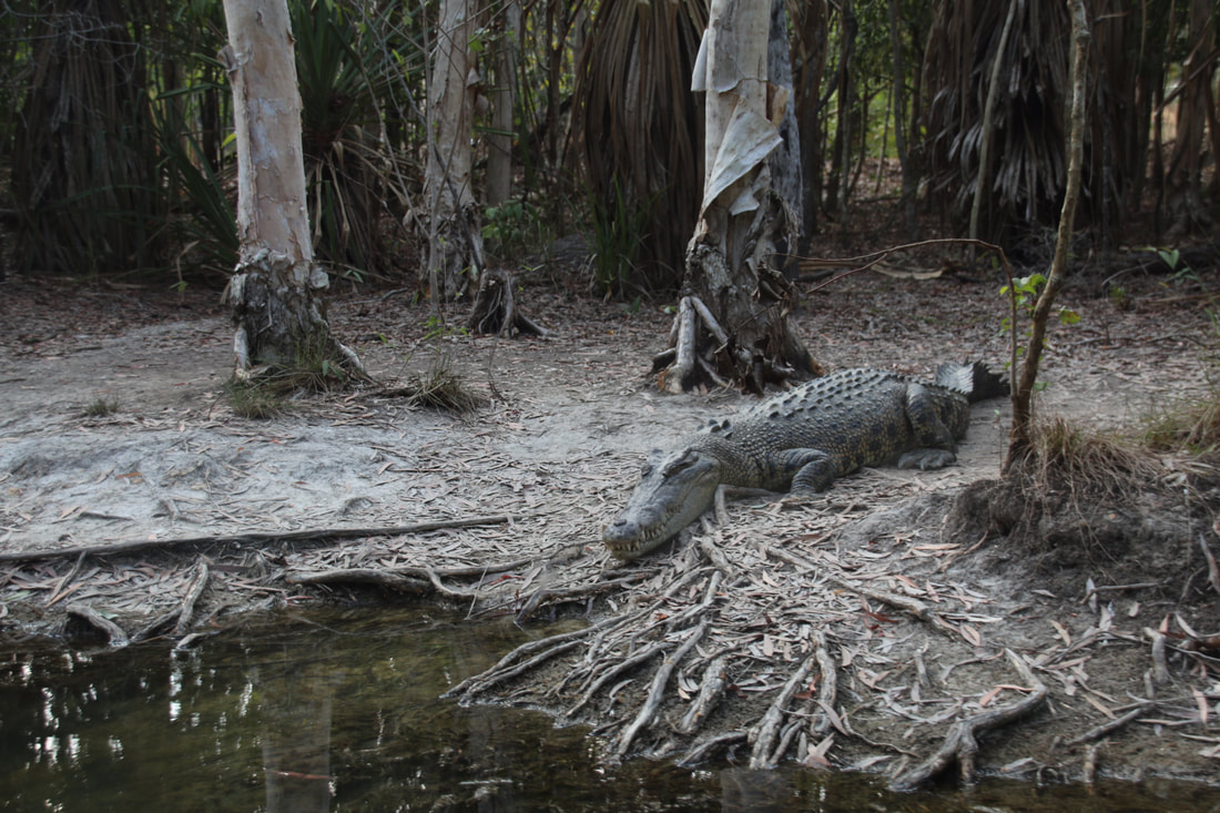 Salt Water Crocodiles, Hartley's Lagoon, Hartley's Crocodile Adventures, Queensland, Australia