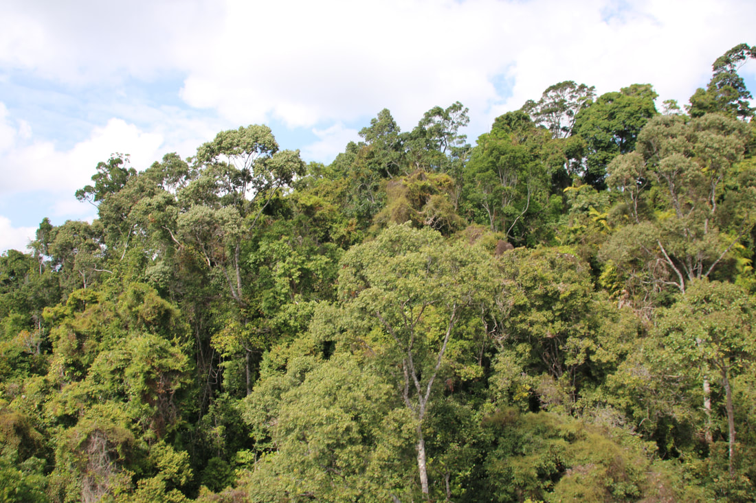 Jungle Canopy, The Skyrail Rainforest Cableway, Cairns to Kuranda, Queensland, Australia