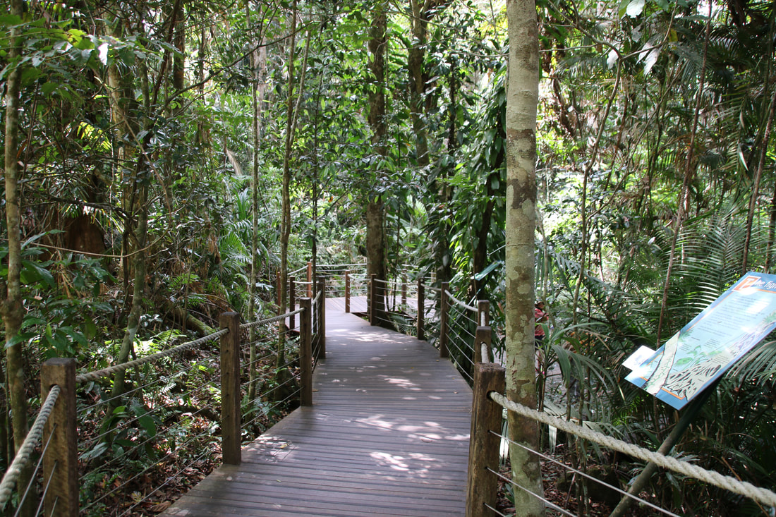 Rainforest Walks, The Skyrail Rainforest Cableway, Cairns to Kuranda, Queensland, Australia