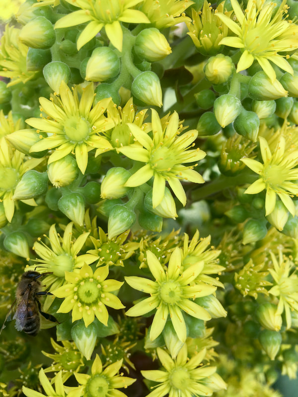 Green and Yellow flowers with a bee