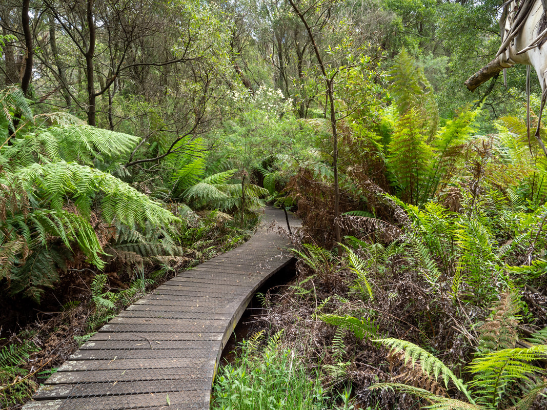 Endeavour Fern Gully, Red Hill on the Mornington Peninsula