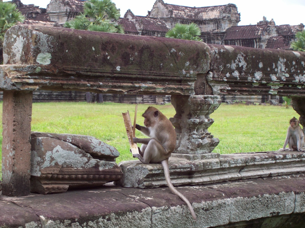 Angkor Wat Temple, Siem Reap, Cambodia, Monkeys