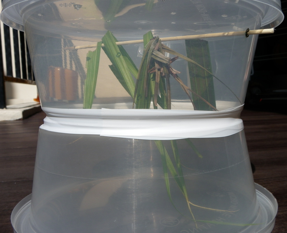 Make your own insect and bug keeper from recycled containers.