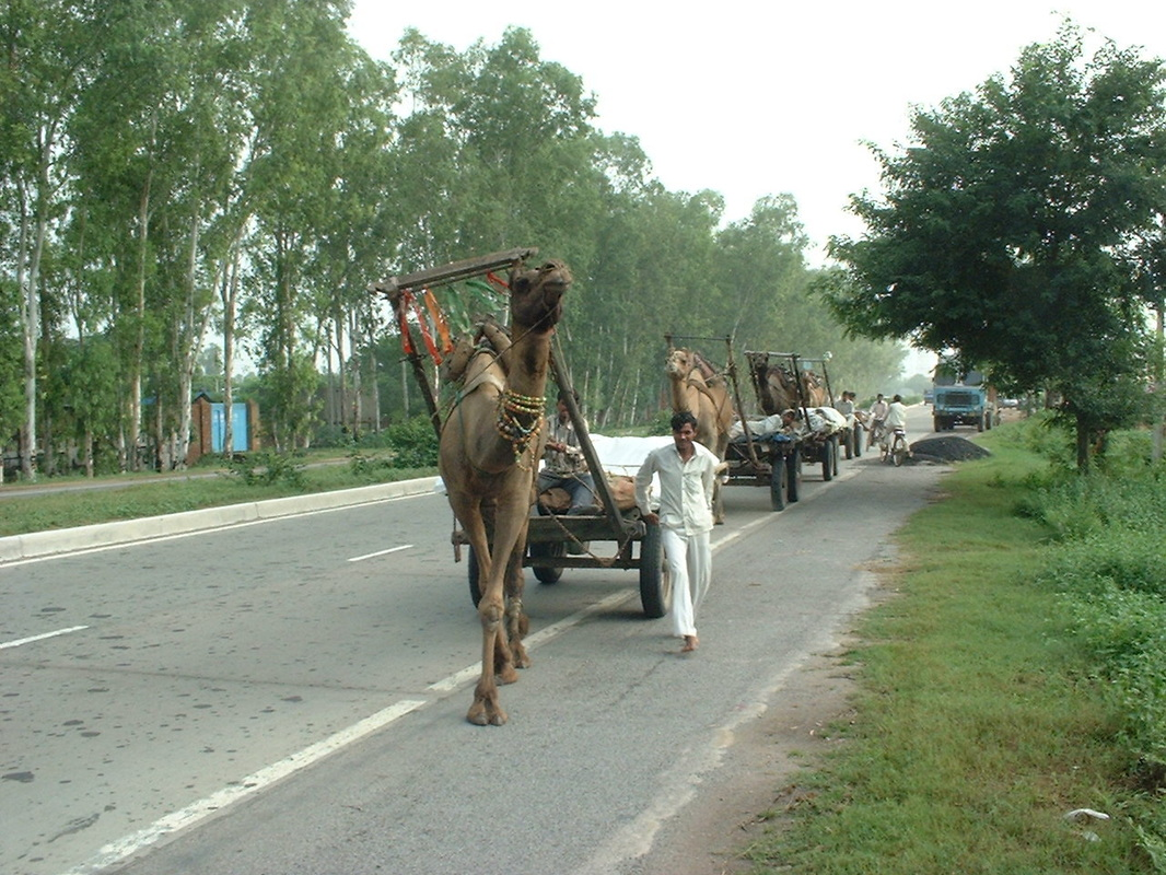 India, camels pulling wagons, roads