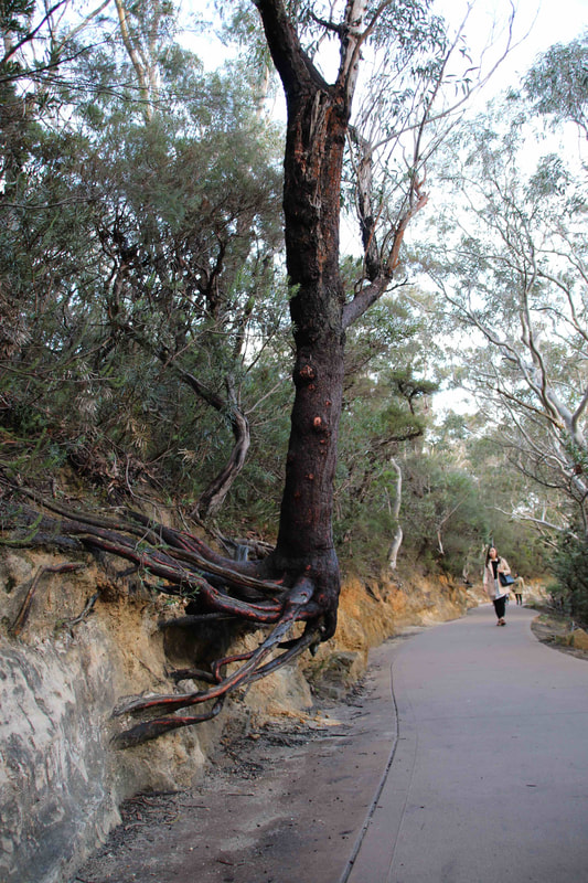Walking Trails, The Three Sisters, Katoomba. The Blue Mountains, New South Wales, Australia.