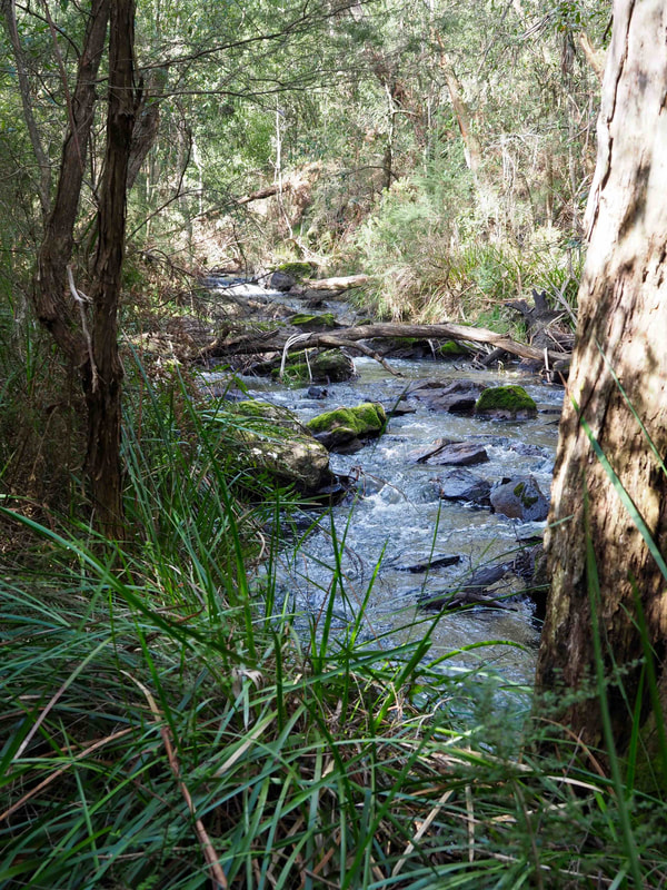 Creek along Baldry's Crossing Circuit Walk, Main Ridge, Mornington Peninsula, Victoria, Australia